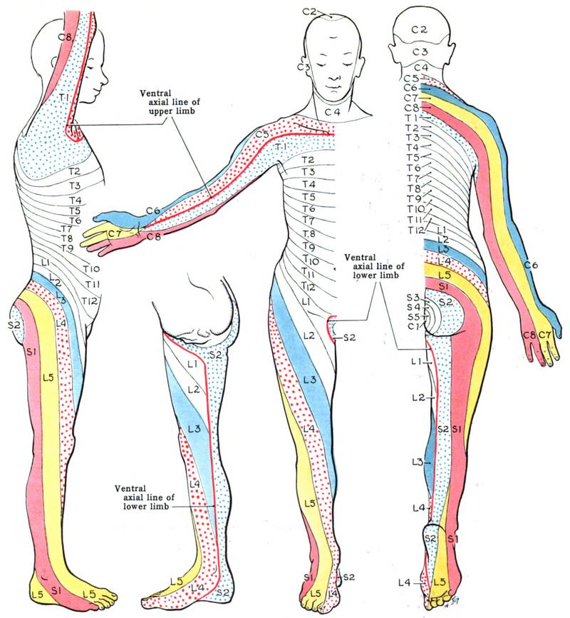 Lensemble de la gymnastique à lombaire osteokhondroze avec les images